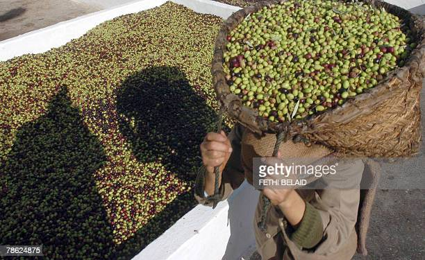 Tunisian workers carry olives during the fabrication of olive oil 22 December 2007 in Djedeida near Tunis 5 percent of the world olive trees grow...