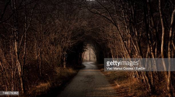 Tunnel Amidst Trees