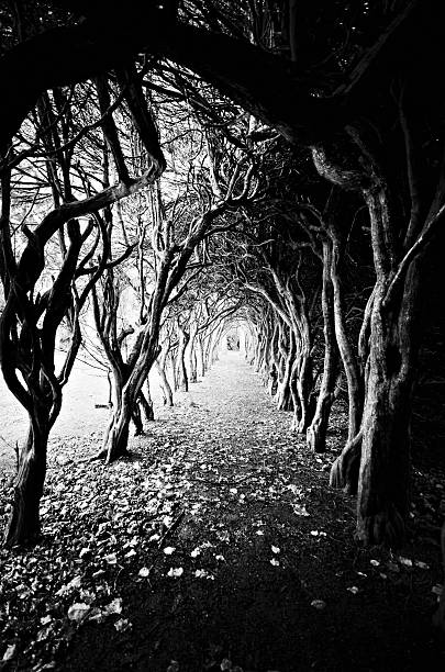 Tunnel Of Trees Wall Art