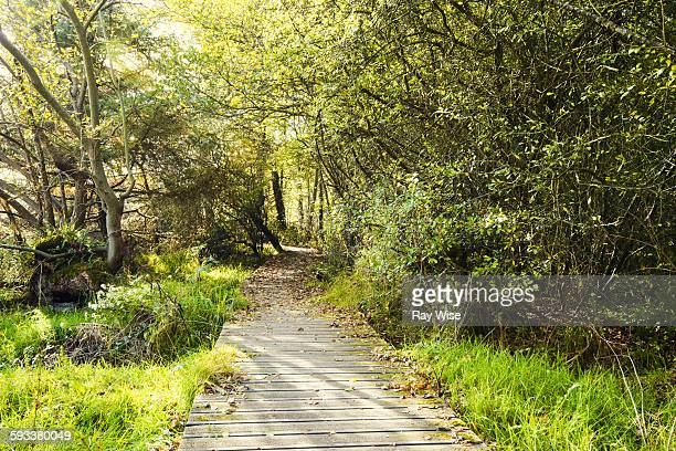 tunnel through the trees - menai straits stock pictures, royalty-free photos & images