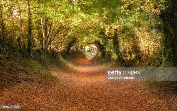 tunnel vision - west sussex stock pictures, royalty-free photos & images