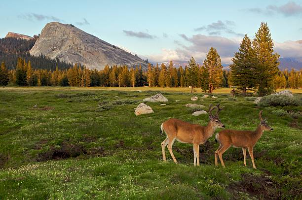 Tuolumne Meadow, Yosemite