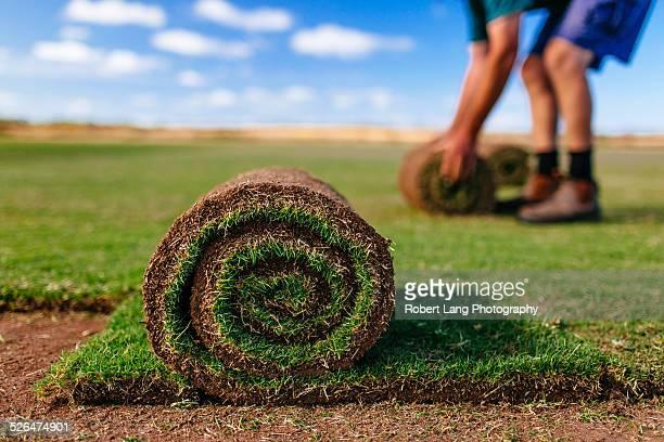 Turf farm, pre-grown lawn cut and rolled