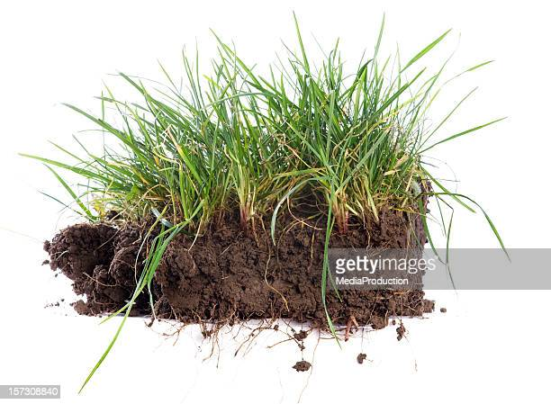 turf - cross section stock pictures, royalty-free photos & images