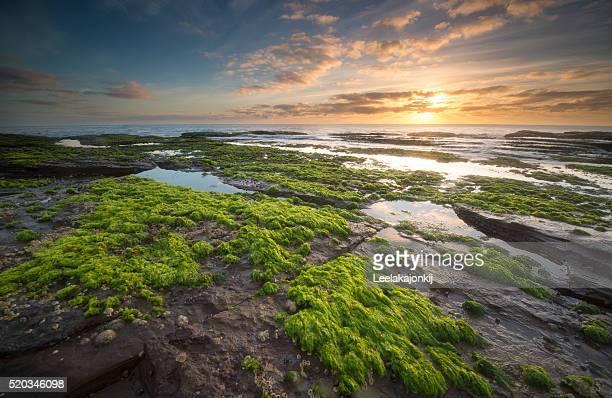 Turimeta beach, NSW