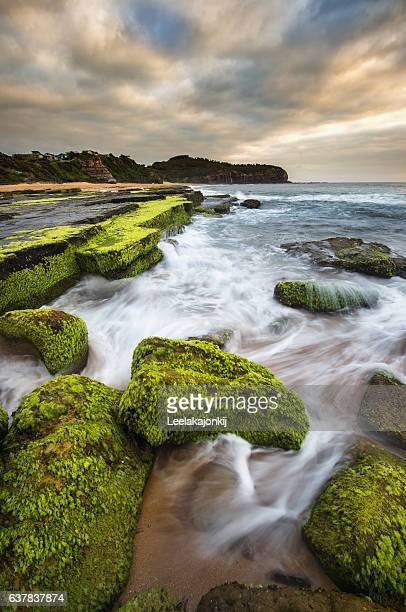 turimetta beach north beach from sydney. - north stock pictures, royalty-free photos & images