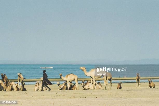 Turkana Herder with camels on lake shore with dug out