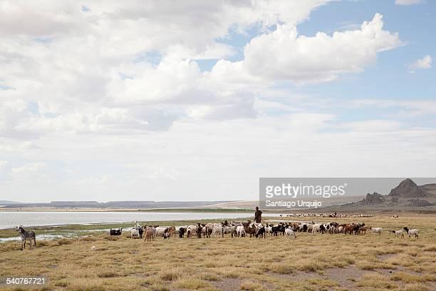 Turkana shepperds around Lake Turkana