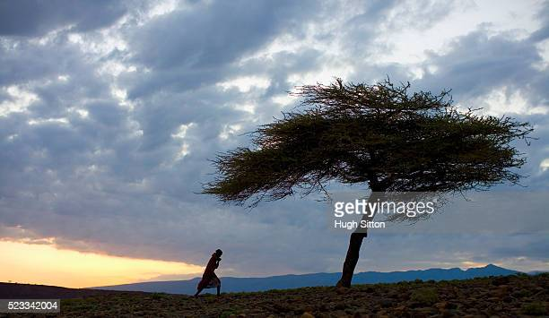 turkana woman walking towards tree - hugh sitton stock pictures, royalty-free photos & images