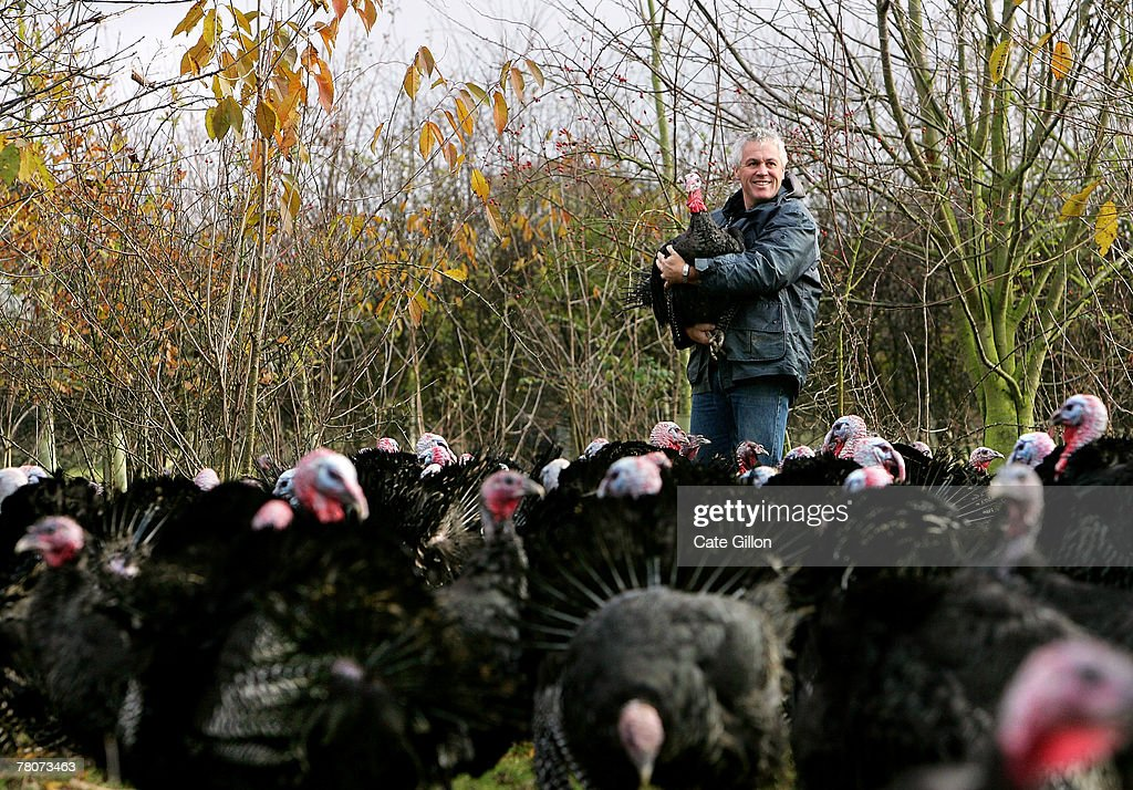 Turkey farmer, Paul Kelly poses with his Kelly Bronze wild turkeys in their woodland home on November 22, 2007 in Danbury, Essex, England. It is the first year that Paul Kelly has bred wild turkeys where the birds live between bluebell woods and open pasture. Using traditional processing methods, Kelly plucks and hangs the free-range birds for 14 days to allow them to develop their flavour.