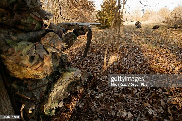 turkey hunter aiming at turkeys - turkey hunting stock photos and pictures