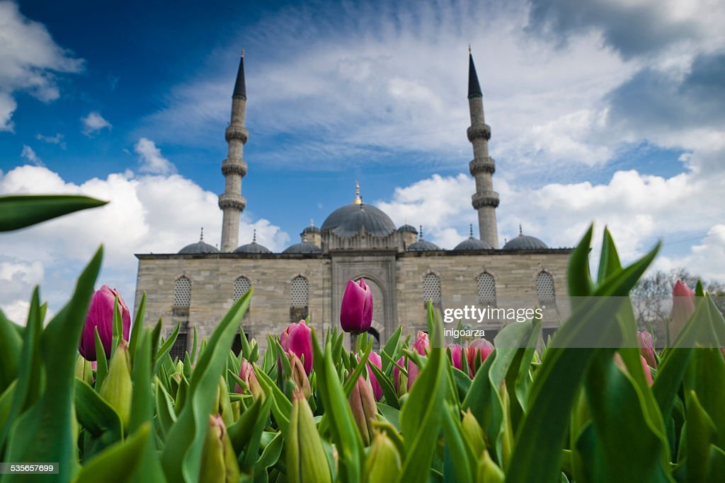 Turkey, Istanbul, Tulips in front of Yeni cami mosque : Stock Photo
