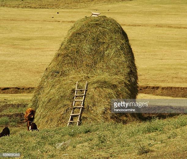 Turkey, Ladder on oversize haystack