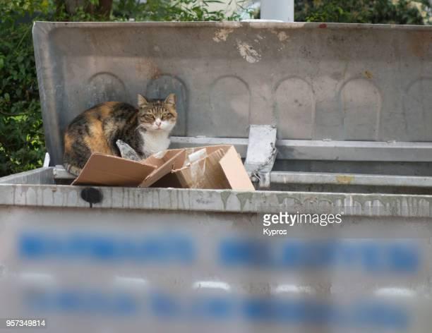 Turkey, Marmaris Area, 2017: View Of Cat With Rubbish In Wheelie Bins