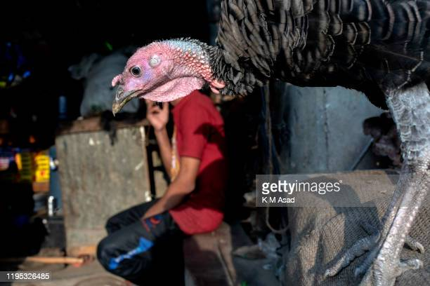A turkey outside of a shop at Lalbag at the side of Buriganga River Dhaka