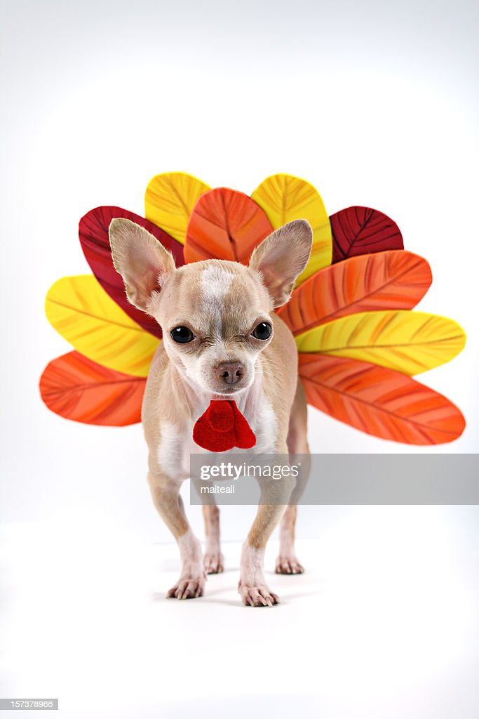 turkey : Stock Photo