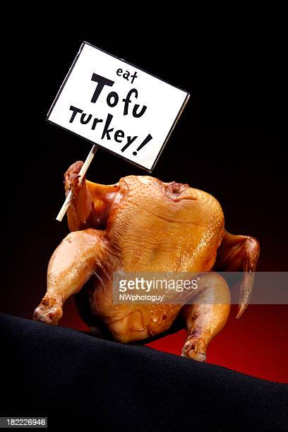 turkey promoting tofu - funny turkey images stock photos and pictures