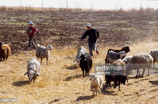 Turkey, Turkey on its way to Europe. Near Nusaybin: shepherd at the turkish-syrian border, at the turkish side