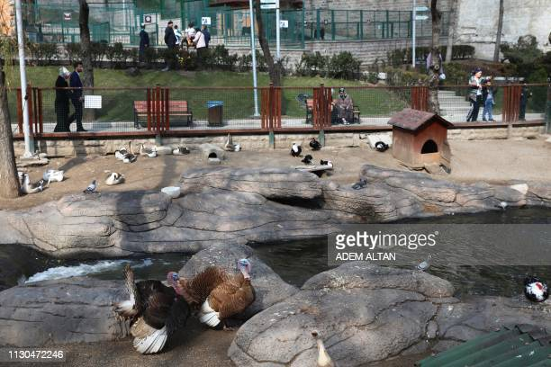 Turkeys stands in their enclosure at the Kecioren Municipality Pet Park in Ankara on March 14 2019