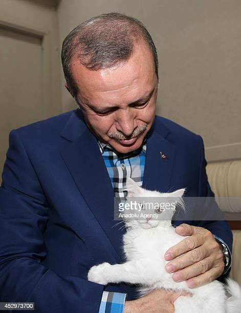 Turkish Prime Minister and Presidential Candidate Recep Tayyip Erdogan caresses a Van cat known as large allwhite and frequently odd eyed with one...