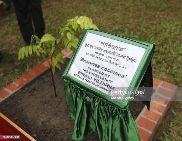 Turkish Prime Minister Binali Yildirim plants a tree in memory of his visit to the National Martyrs' Memorial at Savar, Dhaka, Bangladesh on December...