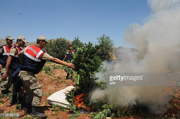 Turkish soldiers burn marijuana during an operation on July 8 2013 in the Lice district of the southeastern city of Diyarbakir AFP PHOTO /MEHMET ENGIN