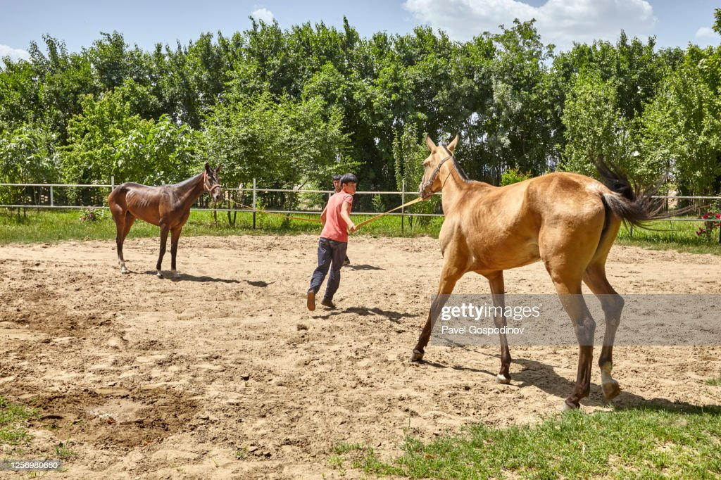 Turkmen Boy Demonstrating The Qualities Of An Akhalteke Horse The Famous Turkmen Horse Breed High Res Stock Photo Getty Images