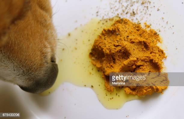 suplemento de cúrcuma pasta oro perros sanos - curcuma fotografías e imágenes de stock