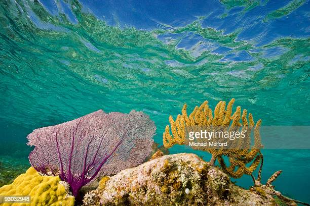 Underwater view of a coral reef in Belize.