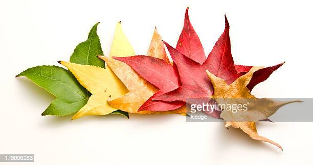 turning leaves - four seasons stock pictures, royalty-free photos & images