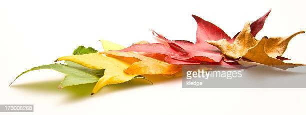foglie di tornitura - le quattro stagioni foto e immagini stock