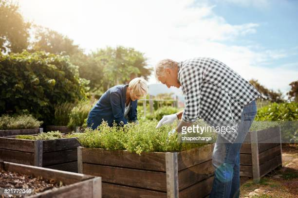 Draaien hun droom tuin in een realiteit