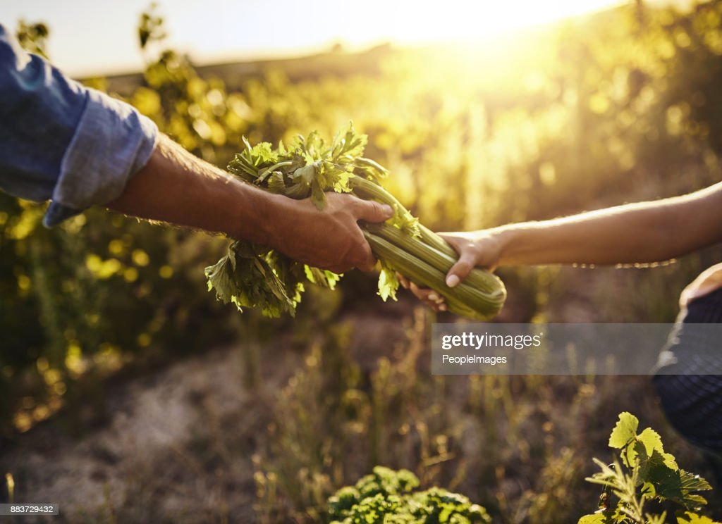 Turning vegetables into a business : Stock Photo