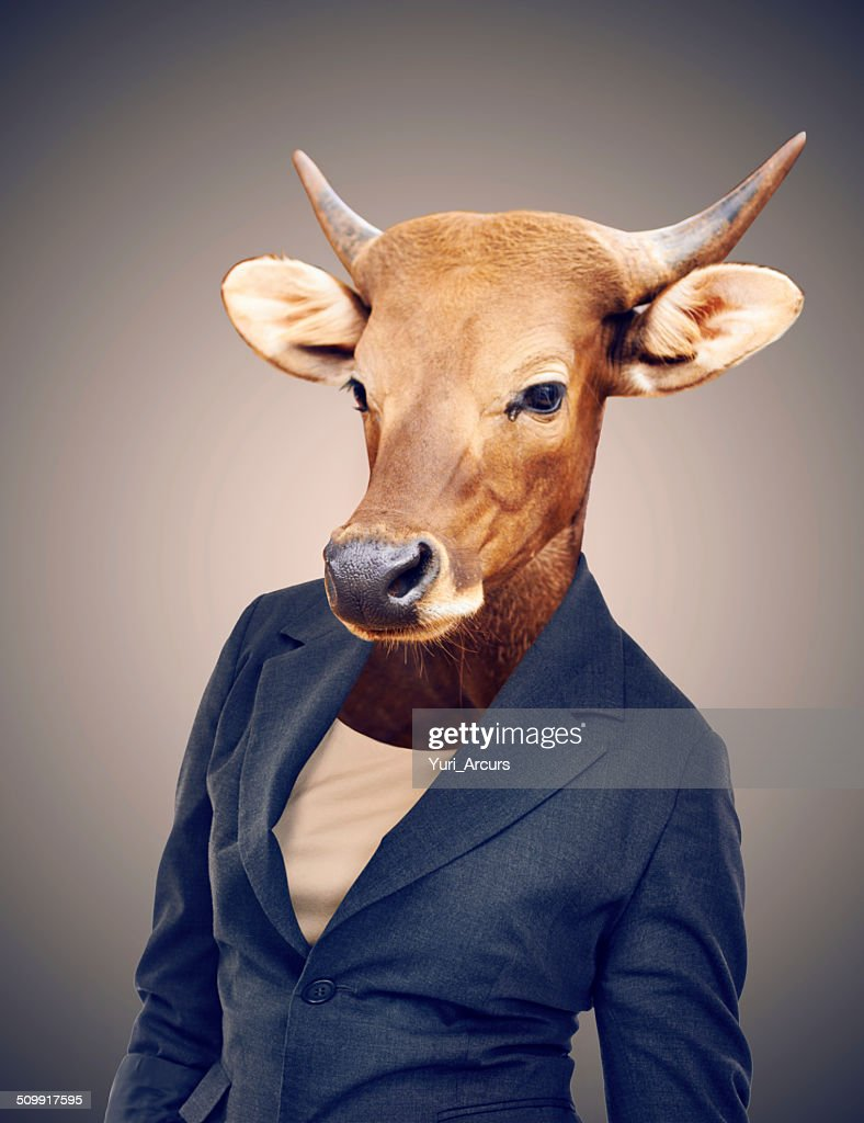 Turning your business into a cash cow : Stock Photo