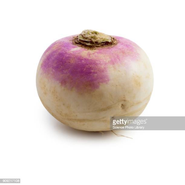 turnip - turnip stock pictures, royalty-free photos & images