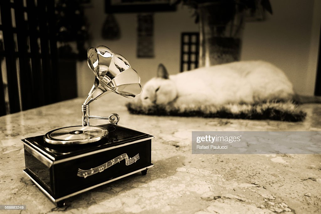 Turntable and the cat : Stock Photo