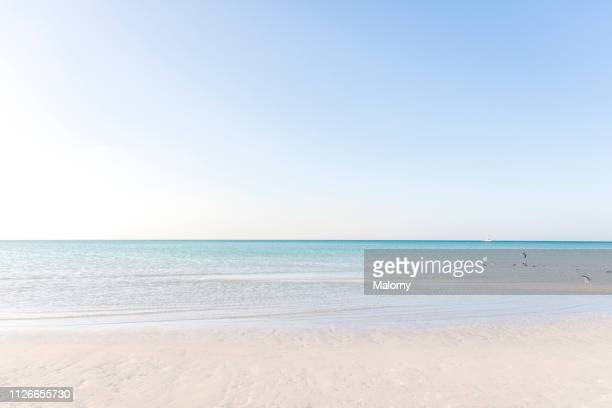 turquoise colored sea and beach with clear blue sky. - holbox island fotografías e imágenes de stock