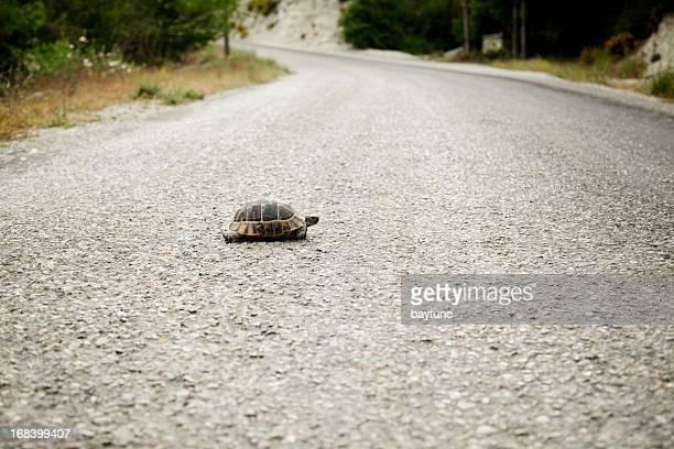 strada di attraversamento tartarughe - lentezza foto e immagini stock