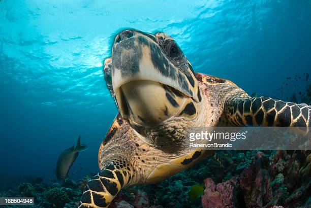 turtle face - beak stock pictures, royalty-free photos & images