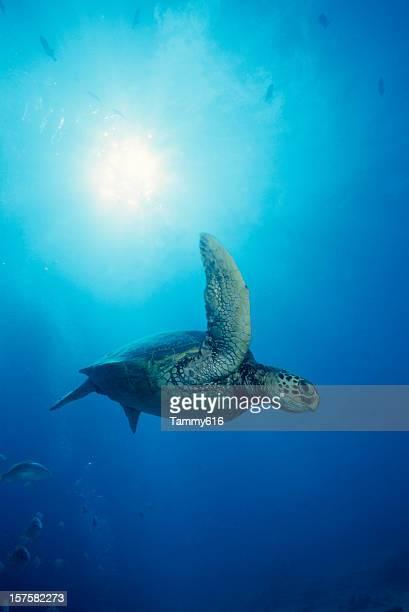 Turtle Flug