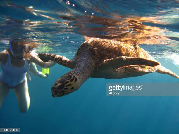 De Turtle volant