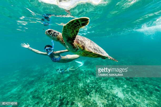 turtle having fun - snorkeling stock pictures, royalty-free photos & images