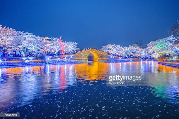 Turtle Head Islet to enjoy the night view of cherry blossoms,Wuxi,Jiangsu Province,China