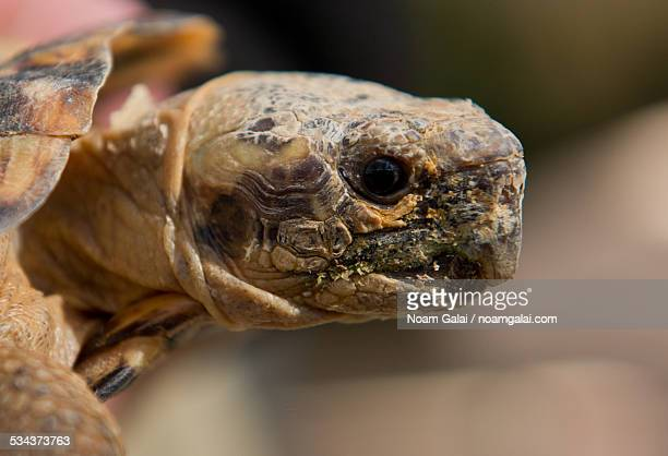 turtle head - noam galai stock pictures, royalty-free photos & images