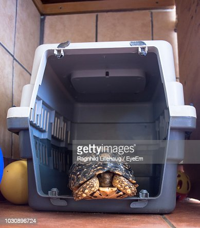 65 Turtle Cage Photos And Premium High Res Pictures Getty Images