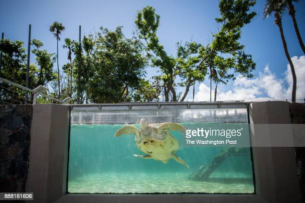 A turtle pool is seen at Coral World Ocean Park on Saturday November 25 in Saint Thomas Virgin Islands