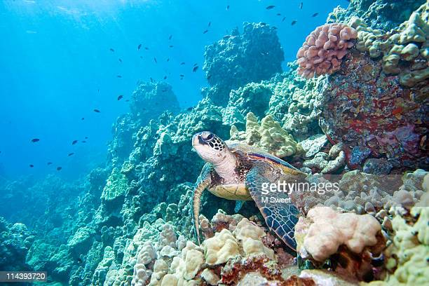 turtle reef - great barrier reef stock pictures, royalty-free photos & images