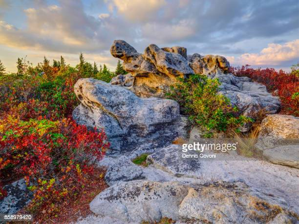 turtle rock at sunset - monongahela national forest stock photos and pictures