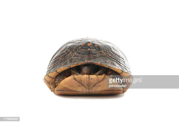A turtle slightly poking his head out of his shell