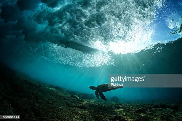 Turtle schwimmt unter einen surfer auf einer brechenden Welle